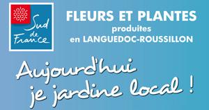 Affiche Fleurs et Plantes Sud de France