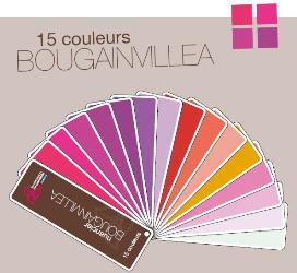 bougainvillier-nuancier-cannebeth