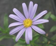 AGATHEA