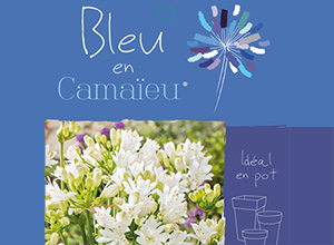 Bleu en Camaïeu