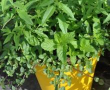 Tijardin bien être potée plantes associées
